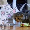 WATCH: The Lion King as voiced by kids and acted out by kittens