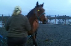 Five horses rescued from freezing River Shannon