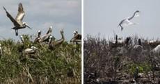 Gulf oil spill: The devastation one year on