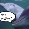 Reckless dolphin teens found to be deliberately getting high by chewing pufferfish