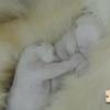 Newborn polar bear twins enjoy a heart-melting snuggle