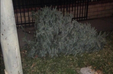 6 abandoned Christmas trees that just wanted to be loved