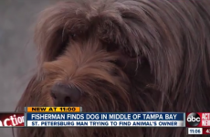 Frightened dog found treading water two miles off the coast of Florida
