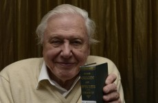 What is the one species of animal David Attenborough 'never thinks about'?
