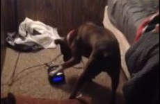 Man discovers his dog has been hitting the snooze button for him