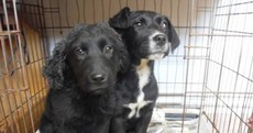These nine dogs have less than 48 hours to live if they can't be re-homed
