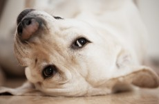 Poll: Should bereaved pet owners be given compassionate leave?