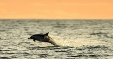 Your baby dolphin making the most of the Wexford winter sunshine pics of the day