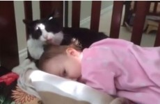 Caring cat just wants this little girl to be squeaky clean