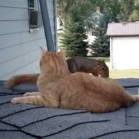 Squirrel and cat are unlikely best pals