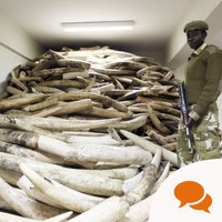 Video column: Is there a viable solution to ivory poaching?