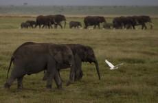 Organisation brings elephants to Twitter using GPS collars