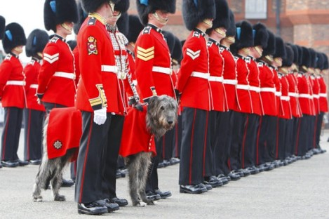 The Irish Guards wearing the uniform that Prince William will wear today.