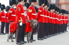 Prince William to wear Irish Guards uniform when he weds today