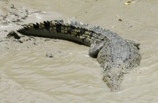 Crocodile snatches 12-year-old boy in Australia