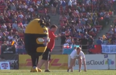 This is what happens when you mess with the USA's rugby mascot