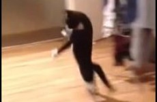 Watch as this cat hops hilariously across a kitchen on its hind legs