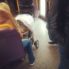 Here's a dog in a pram on the Luas