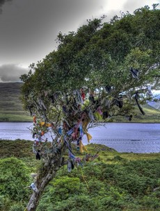 14 amazing Irish trees to see before you die