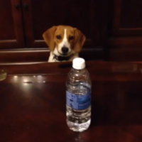 This determined dog really wants to get his paws on that bottle