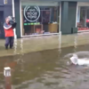 Sharks* have been spotted swimming on the streets of Cork