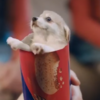 Have you seen the bizarre biscuit ad everyone's talking about?