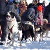 Hilarious talking dog wants to RUN RUN RUN