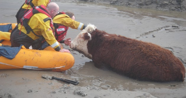 UK floods: River Thames threatens homes, soldiers on standby and a cow stuck in the mud