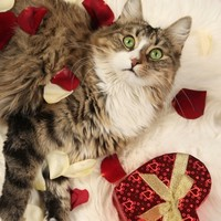 Can't find the time to meet a nice cat? Well, now you can try speed dating
