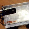 This goldfish is actually driving this robot car