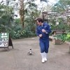Watch this unbearably cute penguin chasing his zookeeper