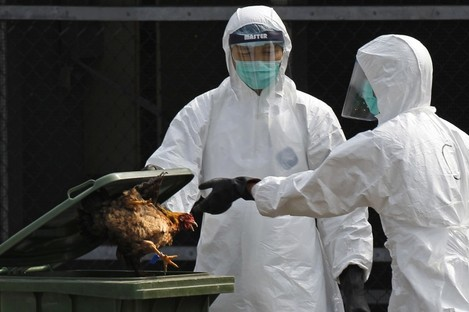 A health worker in full protective gear throws a killed chicken to a rubbish bin at a poultry market in Hong Kong.