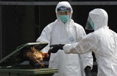 Fifth bird flu case reported in Hong Kong