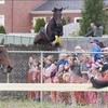 Seven injured as horse jumps into crowd at Victoria racetrack