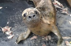 These adorable seals had their home destroyed during last week's storms