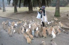 Watch as this woman is caught up in a swarm of cute, fluffy bunnies