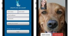 Weird Wide Web: Skyping with your dog, kiddie smartwatches and falling in love
