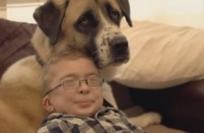 Heartwarming film documents bond between disabled boy and his three-legged dog