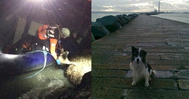 'Motionless' sheepdog now doing fine after rescue from rising tidal waters