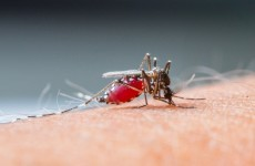 "Over half of Africa remains at ""moderate to high"" risk of malaria"