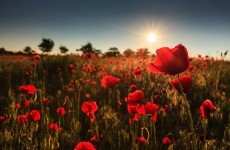 283 Phoenix Parks worth of poppies were cultivated in Afghanistan last year