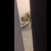 US Olympian finds a 'wolf' wandering around her Sochi hotel