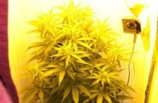 Two men arrested after grow house discovered in Kildare