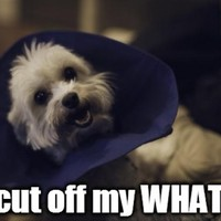 11 things your dog would say if it could talk