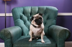 This research proves dogs make excellent therapists