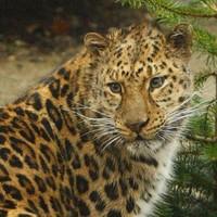 Boy, aged 7, mauled by leopard at popular Kansas zoo