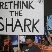 Militant group seeks injunction to stop shark killing