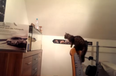 Cat Versus Fishtank