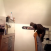 Cat Versus Fishtank