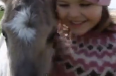 Little girl becomes best friends with lost foal, world dies of cuteness overload